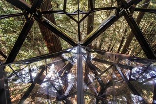 The floor panels are transparent, providing the feeling of total immersion in the forest.