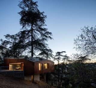 Set between three large cedars, the fourth one grows straight up through the second bedroom.