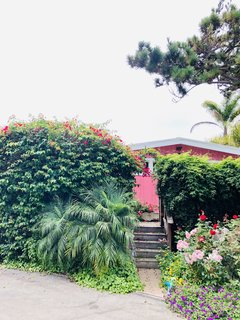 The hot pink bungalow peeks out from behind lush tropical landscaping.