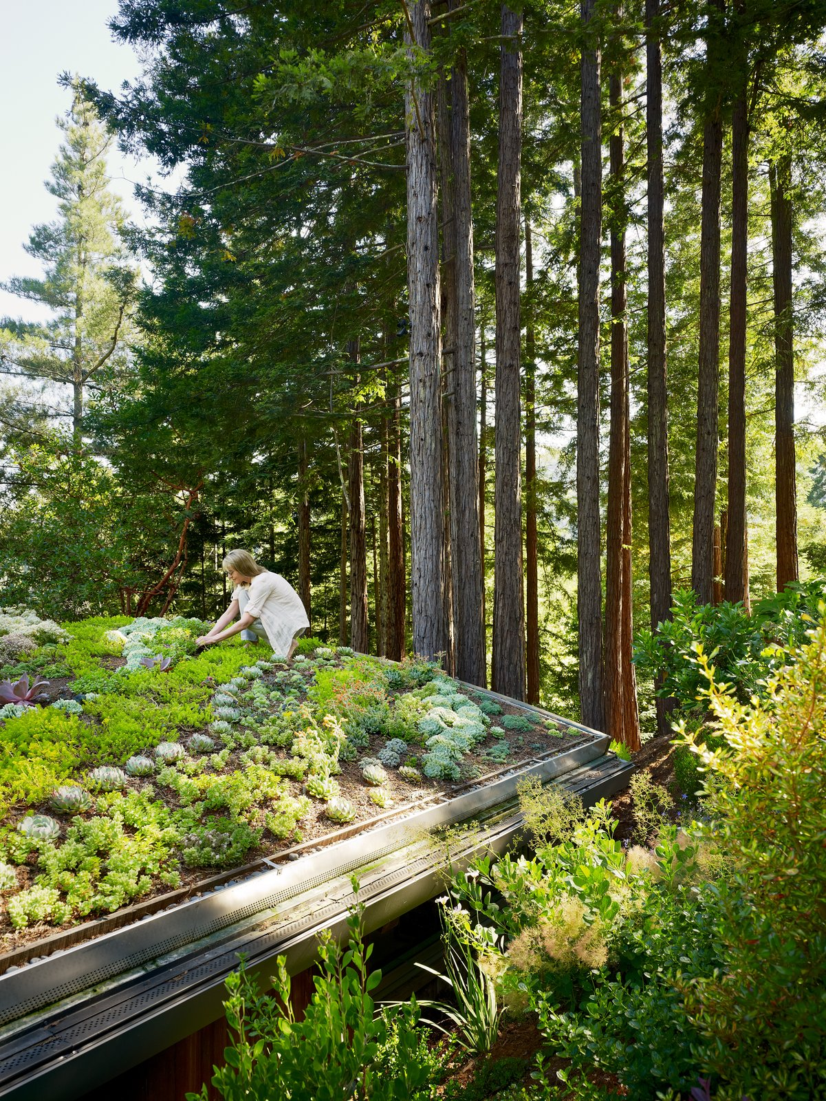 Outdoor, Gardens, Rooftop, Trees, Garden, and Shrubs The accessible green roof on the yoga studio provides additional landscape for gardening.     Mill Valley Cabins by Feldman Architecture
