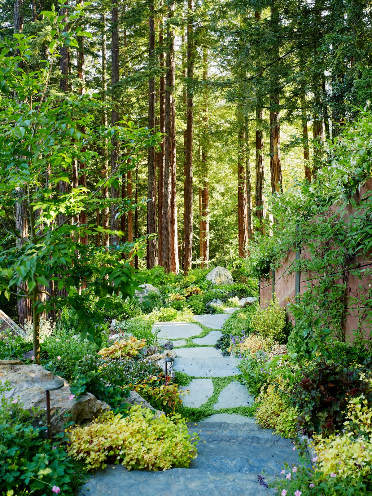 Outdoor, Walkways, Gardens, Woodland, Trees, and Garden A winding path connects the two south-facing structures.     Mill Valley Cabins by Feldman Architecture