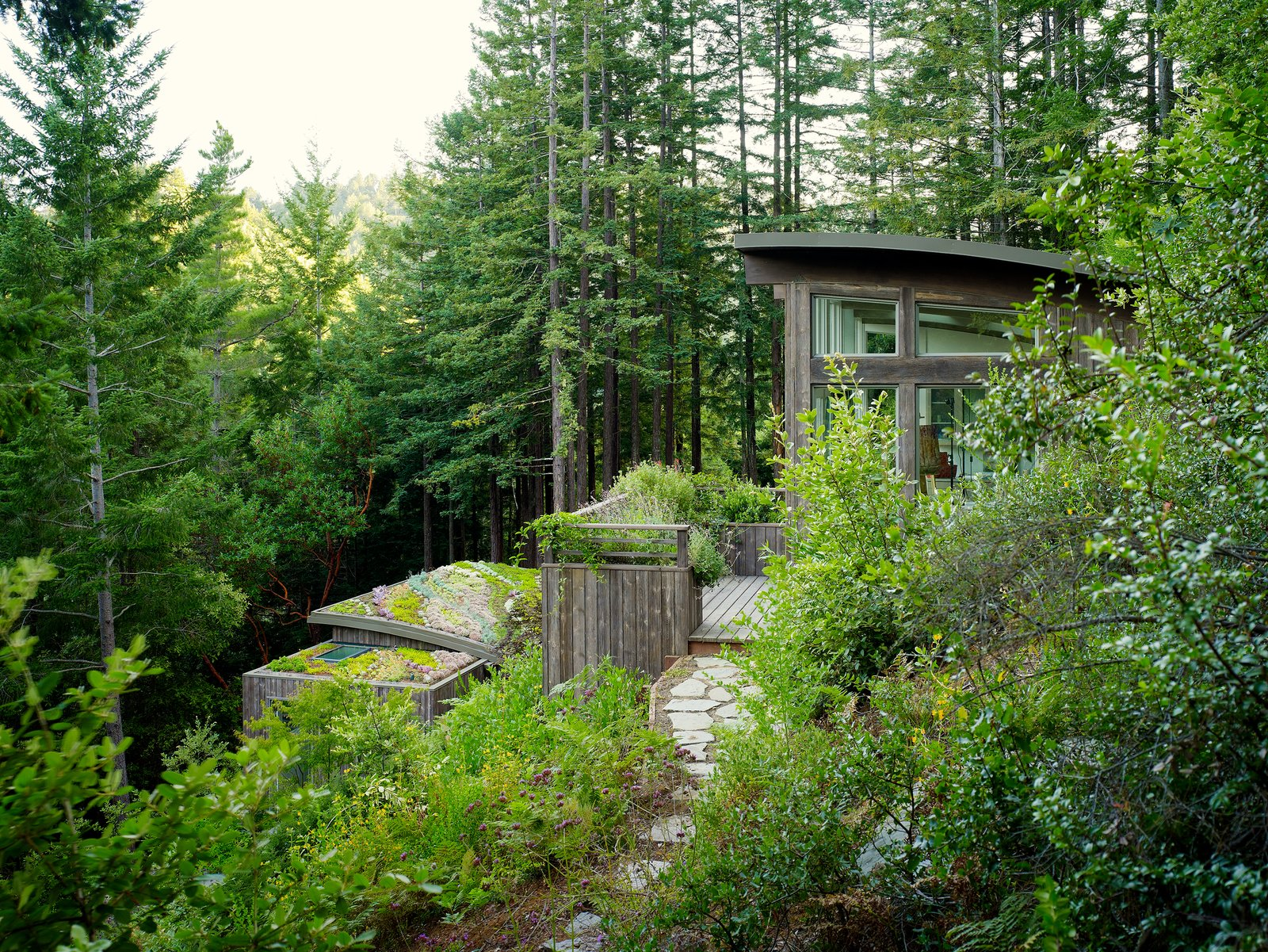 Outdoor, Gardens, Garden, Trees, Side Yard, Shrubs, Walkways, and Woodland Both structures step out to small south-facing terraces.     Outdoor Shrubs Garden Woodland Photos from Mill Valley Cabins