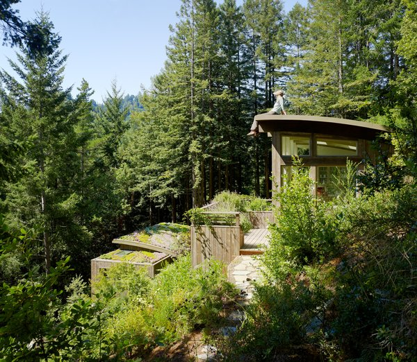 Top 5 Cabins of the Week That Would Be Perfect For Forest Bathing