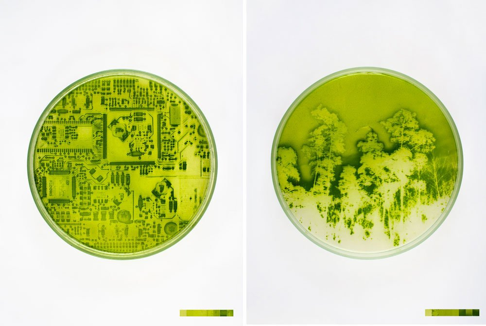 "Lia Giraud's Landscape Photos ""Grown"" On Light-Sensitive Algae  A project nick named ""Algae-graphy.""  Material Spotlight: Algae"