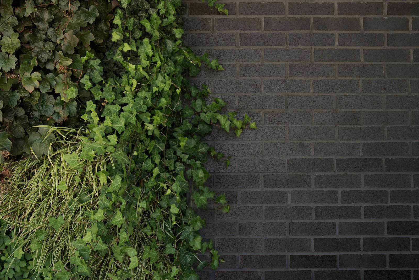 A lush green wall enlivens black Belden Brick walls of the Free Float Pool House by The UP Studio.  Free Float Pool Cabana by The UP Studio