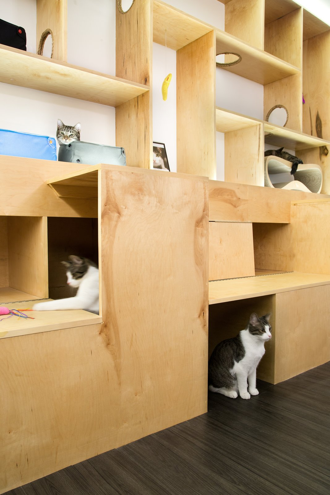 Just below the bench is much needed storage and also functions as a maze for the cats to sneak off for a catnap  Photo 8 of 21 in 21 Cats Living in the Modern World from Meow Parlour