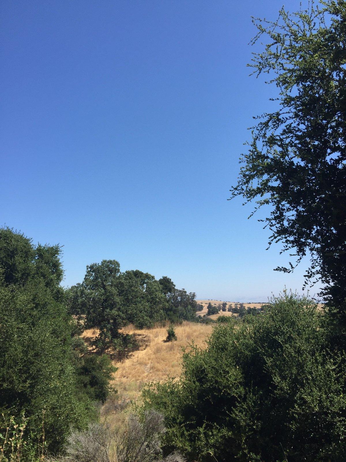 Oaks and grassy hills.  Photo 4 of 7 in Arastradero Preserve
