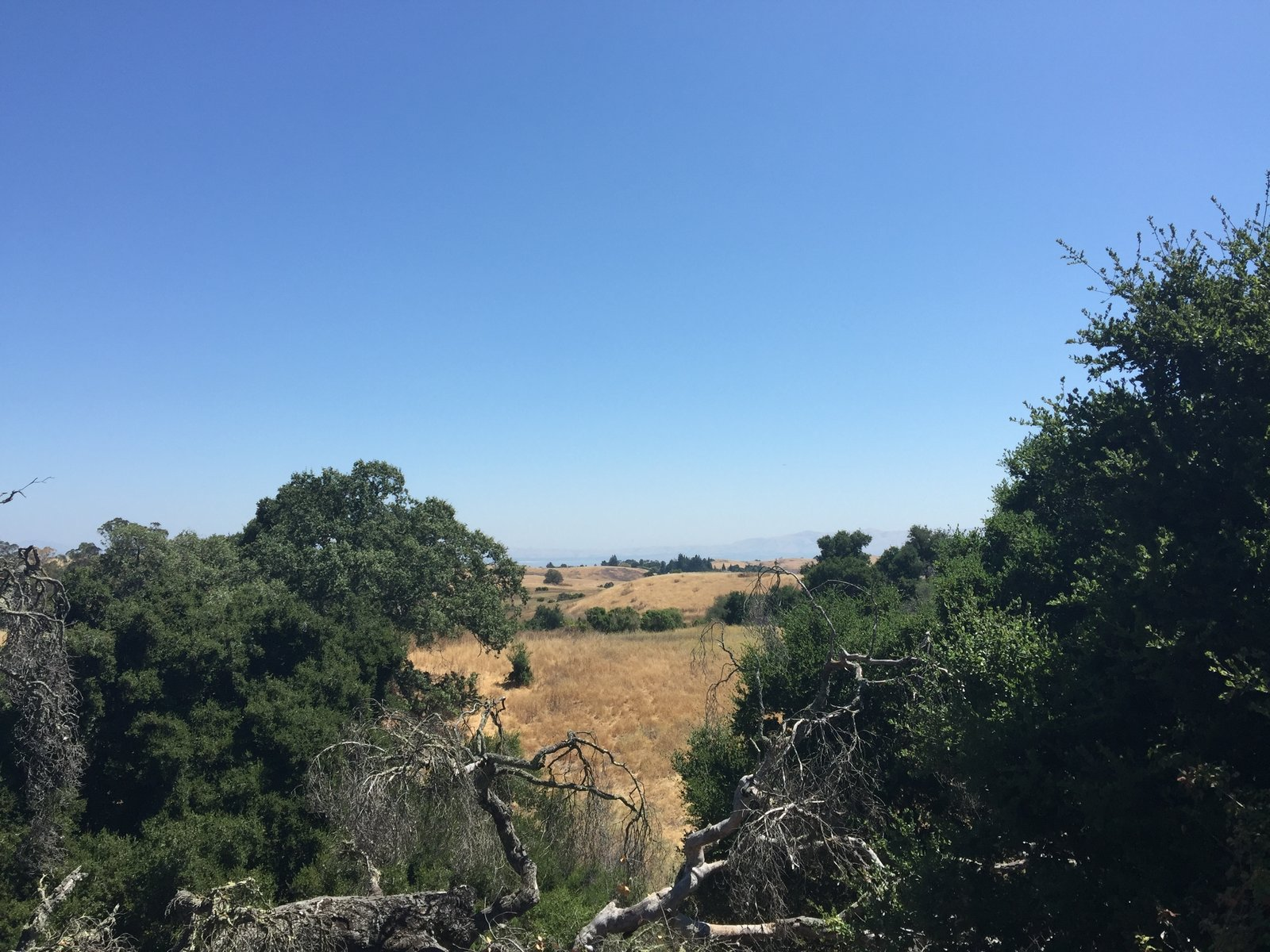 Off in the distance- the East Bay!  Photo 5 of 7 in Arastradero Preserve