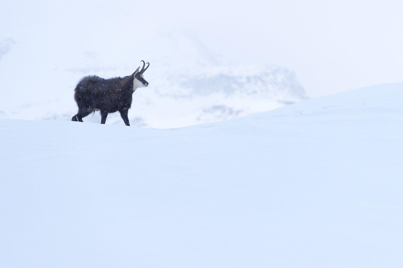 #alpinemodern #wildpresence #italianalps Photo by Martin Dellicour  Wild Presence
