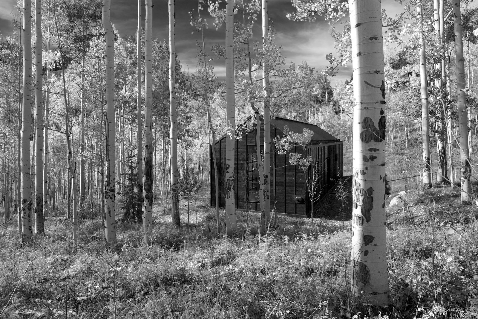 The views from the cabin are much more embedded in the grove, compared with the big mountain views from the main house.  Photo 3 of 13 in Retreat in the Aspen Grove