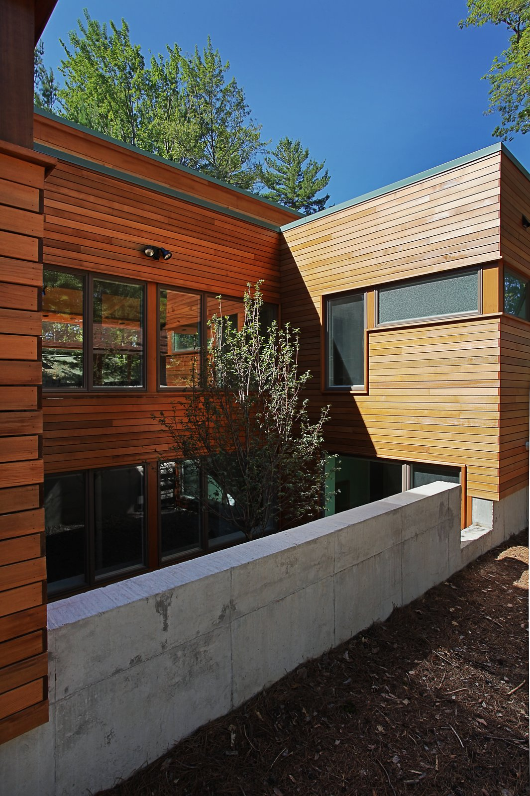 Rear courtyard with tree and basement bedroom windows  Higgins Lake House by Jeff Jordan Architects