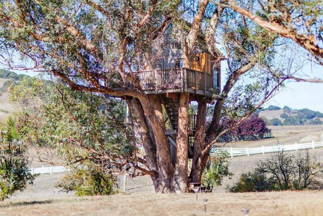 Breathe in the eucalyptus scent while you're lulled to sleep in this majestic nest. Another Bay Area tree house, this one is located in Petaluma, California, which is known for it's small town charm. It's located only a few miles north of San Francisco, while the Santa Cruz option is further south of the city. Enjoy a trip to the vineyards, and watch the sunset on this spacious deck.  Photo 5 of 7 in 7 Breathtaking Tree Houses You Can Actually Rent on Airbnb