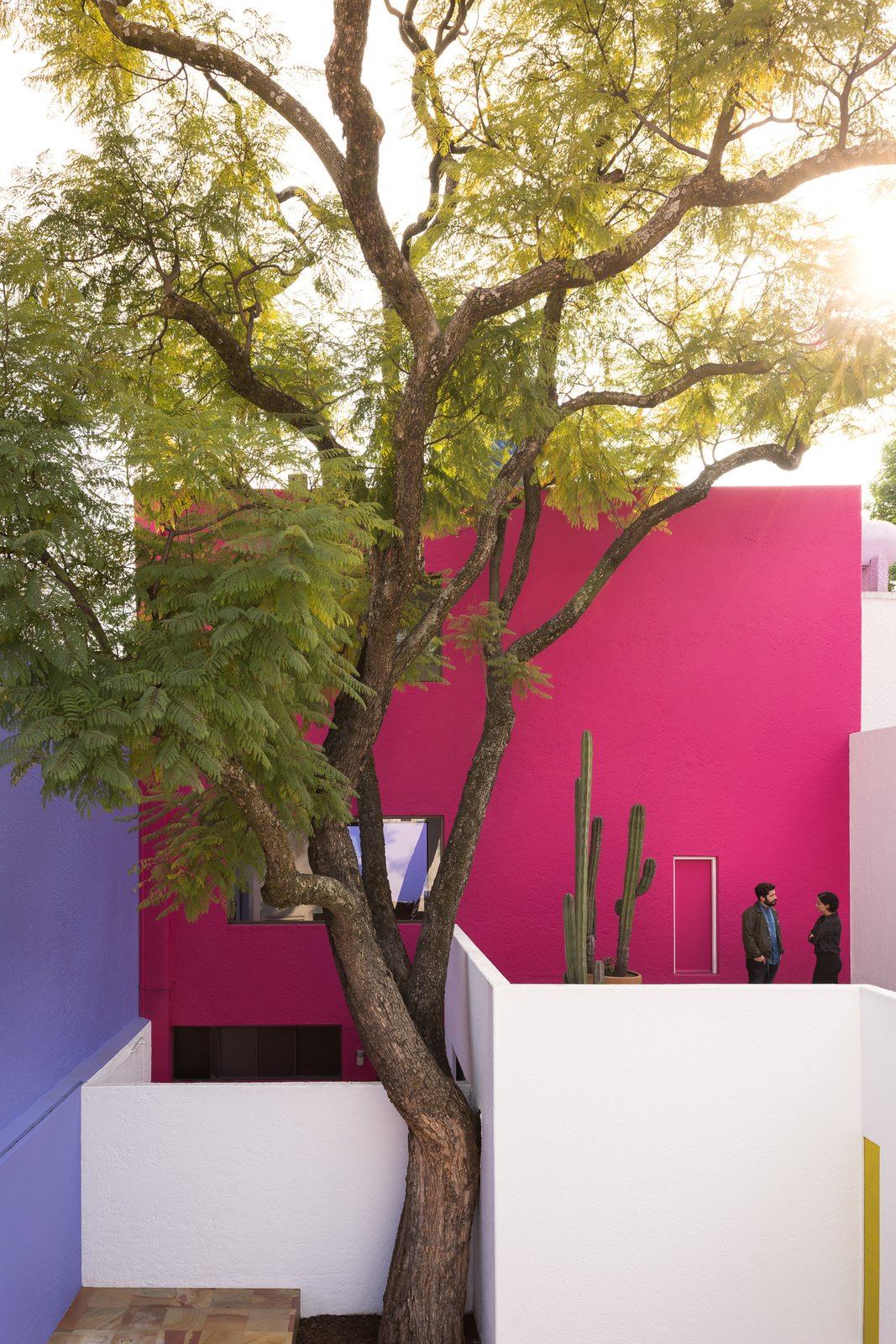 Casa Gilardi courtyard with jacaranda tree