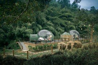 Thailand's Jungle Bubbles Let You Sleep in an Elephant Habitat