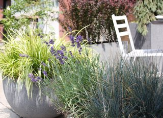Containers not only look beautiful, but also, they provide flexibility for bringing plants indoors in areas prone to overnight frost.