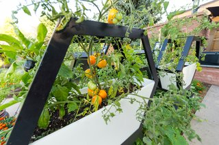 Raised beds and containers are excellent choices for beginners, as you can avoid remedying your existing soil and ensure your new crops are receiving the appropriate nutrients via new potting soil.