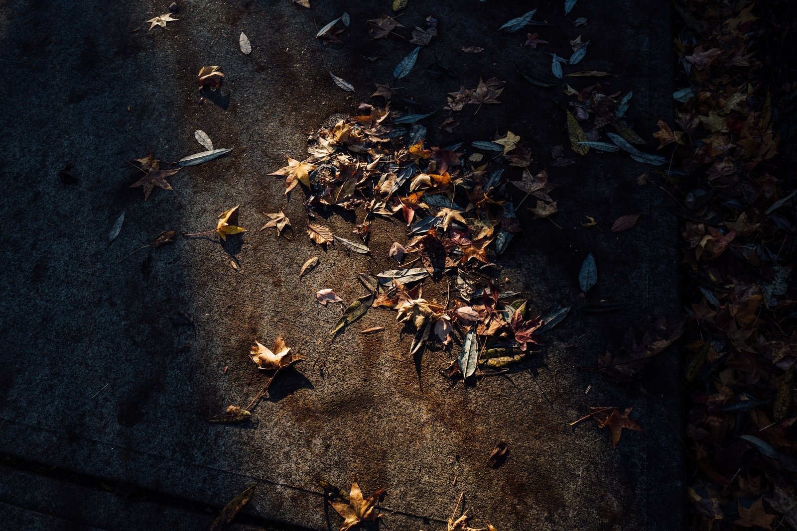 A narrow beam of light hits some dead leaves on the pavement.  Photo 10 of 10 in The Opinionated Leica Q