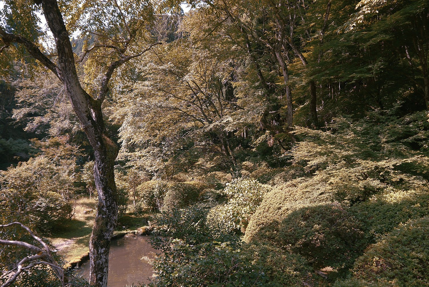 Outdoor and Trees A scenic view of the wild, natural landscape in Yoshino, a city in the Nara region of Central Japan.  Photo 12 of 12 in The Community-Run Cedar House by Airbnb and Go Hasegawa Welcomes Guests in Rural Japan from Yoshino Cedar House
