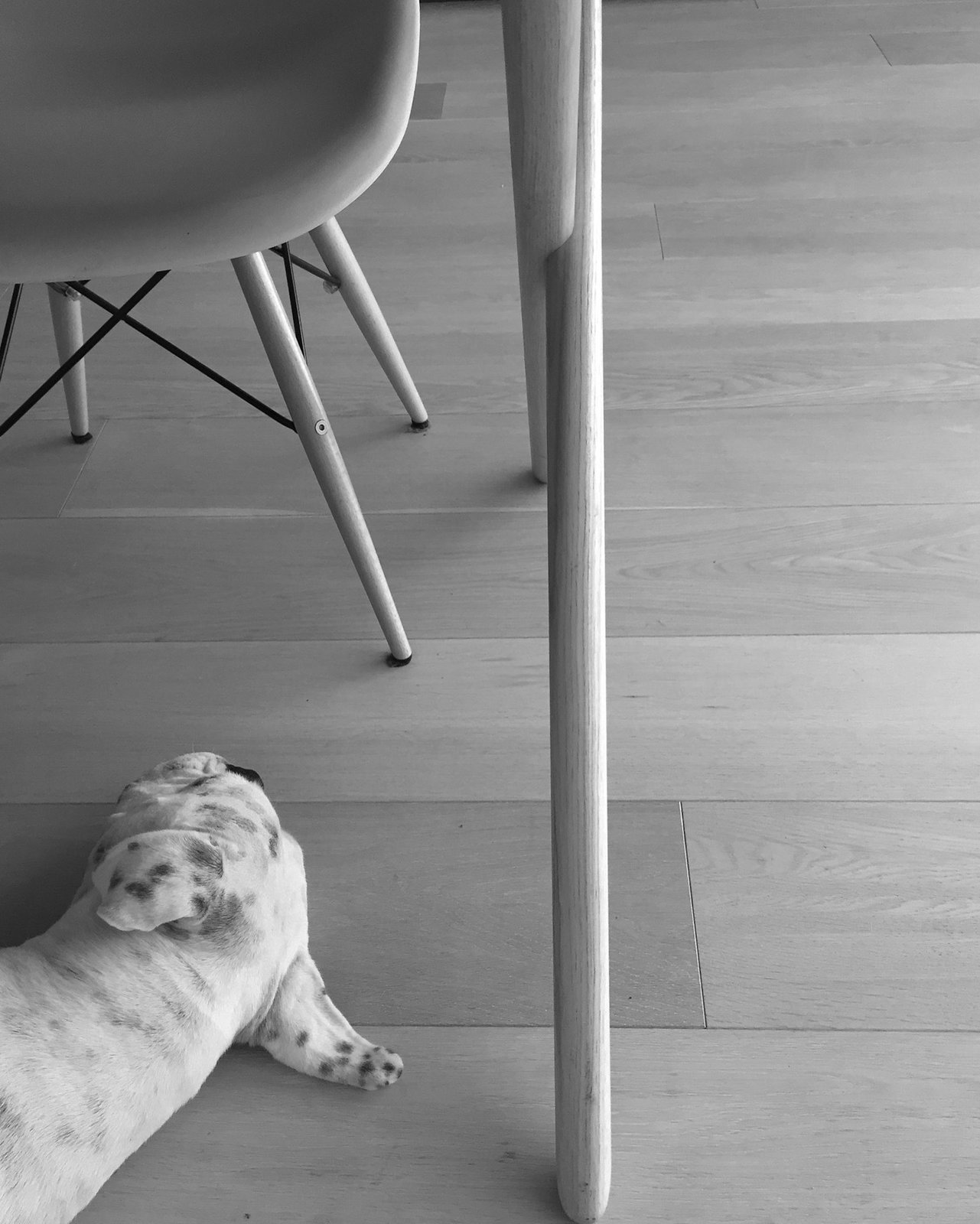 Comfort in #Eames  Dogs on Dwell:  My Modern Boxer Tofu
