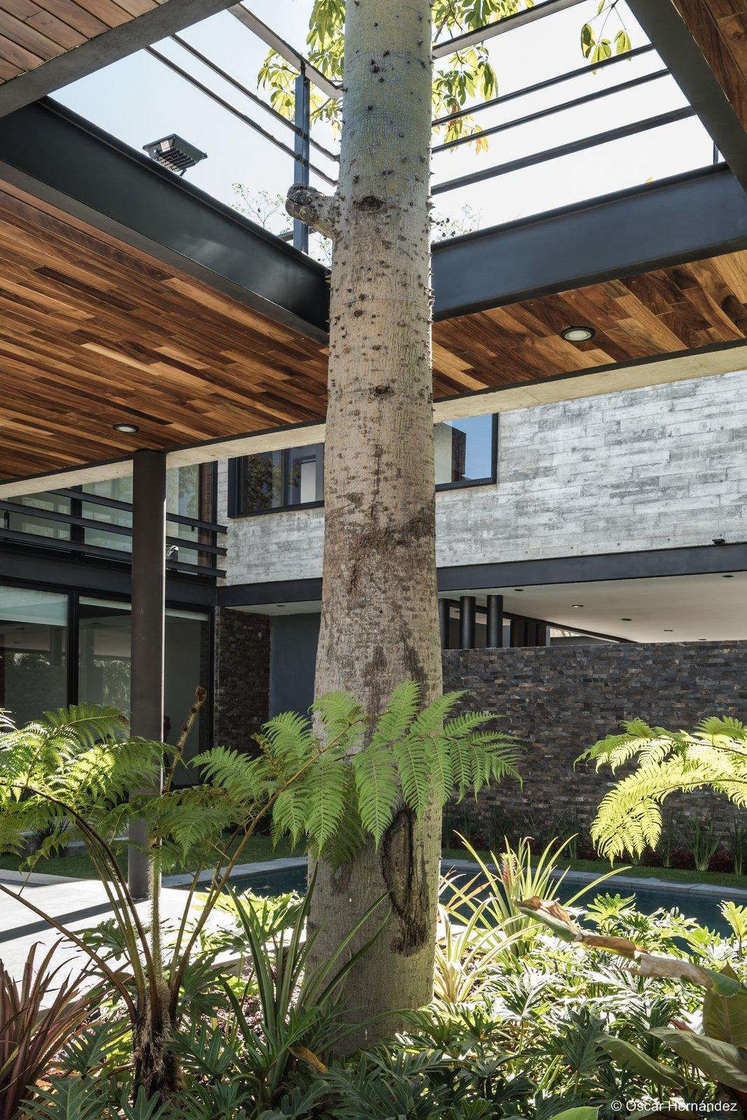 The tree  Casa Kalyvas by Taller de Arquitectura