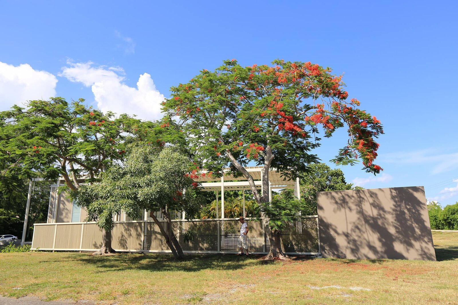 Outdoor, Trees, Concrete Fences, Wall, Landscape Lighting, Side Yard, and Grass Westside Poinciana tree  Umbrella House