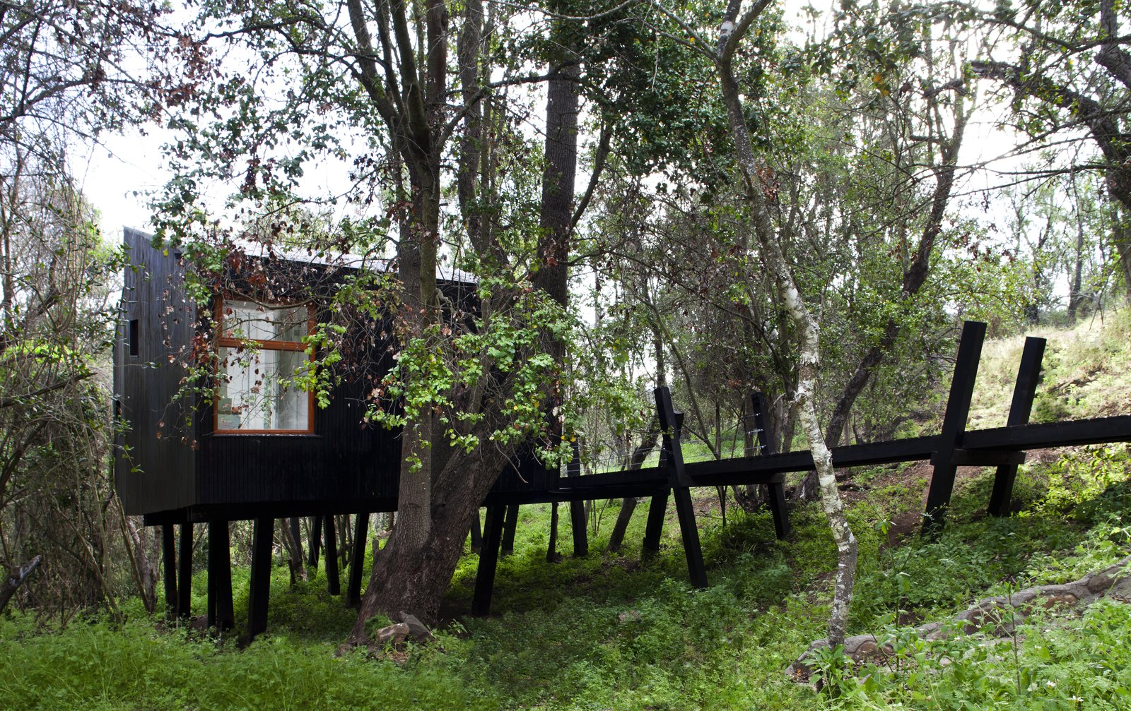 """Exterior, House Building Type, and Wood Siding Material """"Quebrada House"""" translates to Ravine House and speaks to how the design was inspired by the landscape.  Photo 2 of 10 in A Little Chilean Tree House That's One With the Canopy"""
