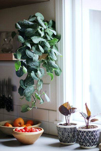 Plants in patterned pots add a little character to this cool, Scandi kitchen.