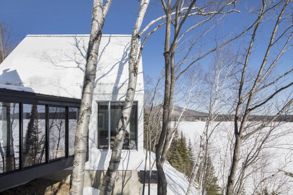 The sheet metal roof and wood cladding of the new structure complements the smooth, shiny birch tree barks on the site.