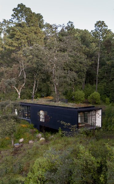 Upcycled wood—sourced from fallen trees near the site—was used as part of the shrub-covered green roof.