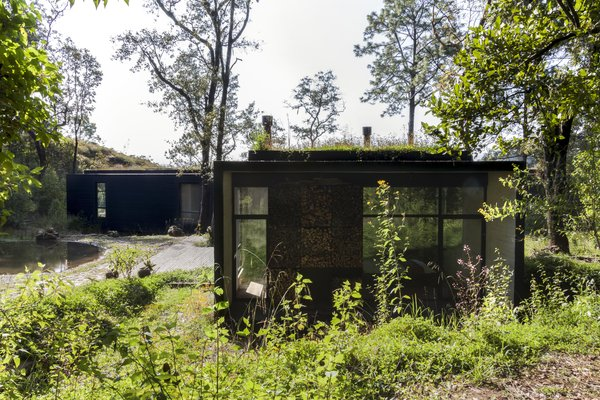 The green roof makes the house look as if it's camouflaged within its forest surroundings.