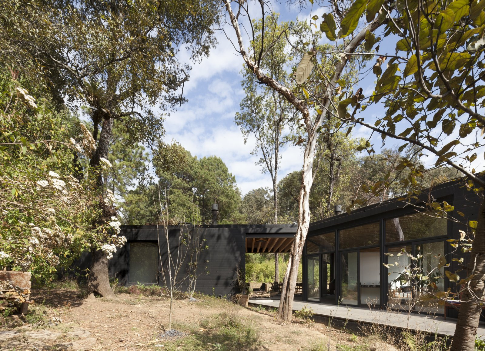 Exterior, Concrete Siding Material, House Building Type, Flat RoofLine, and Green Roof Material Glazed walls allow the interior living areas to be seamlessly connected to the outdoors.  Best Photos from Upcycled Trees Cloak This Modern Mexican Home