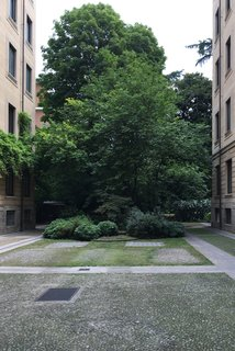 Although the home is nestled in a busy city, it has the pleasure of overlooking a peaceful internal garden. Here is a verdant tree in the middle of the courtyard on the property.