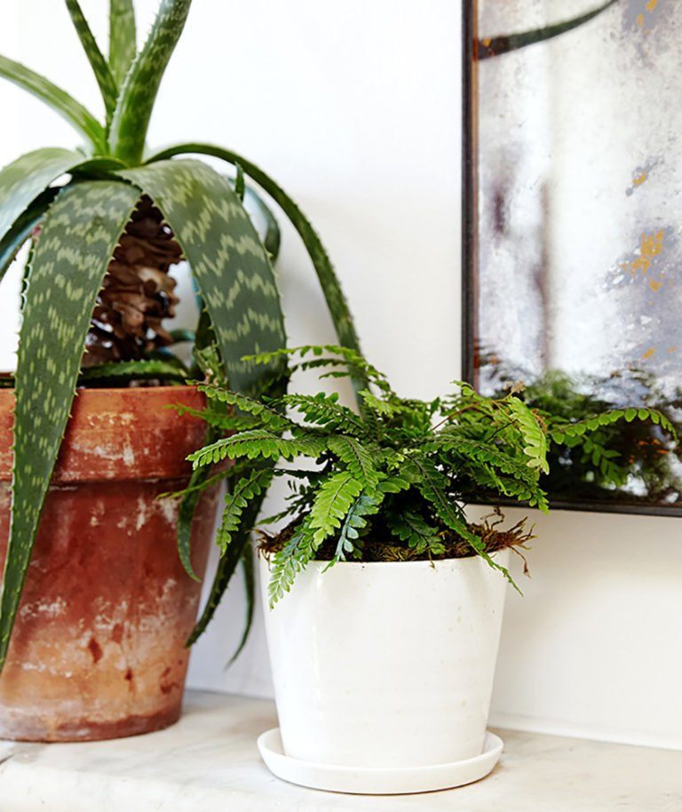 Although ferns need regular watering, they don't require much light; Source: Sidney Bensimon/The Sill  Photo 9 of 12 in 5 Reasons Why Landscaping and Bringing Plants Into Your Home Is So Valuable from Why Plants Improve Mornings