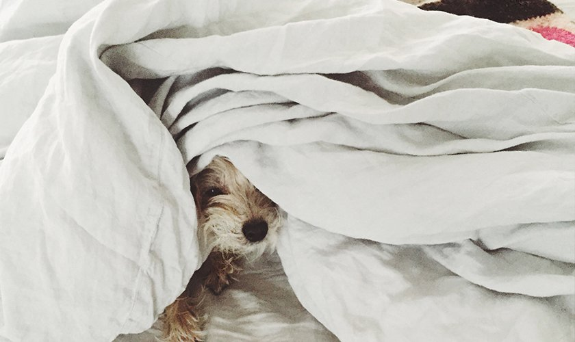 Bringing a loved one into your room – like a pet – adds positive energy; Source: Emily Katz/Parachute  Photo 3 of 5 in Emily Katz on How to Give a Bedroom Good Vibes