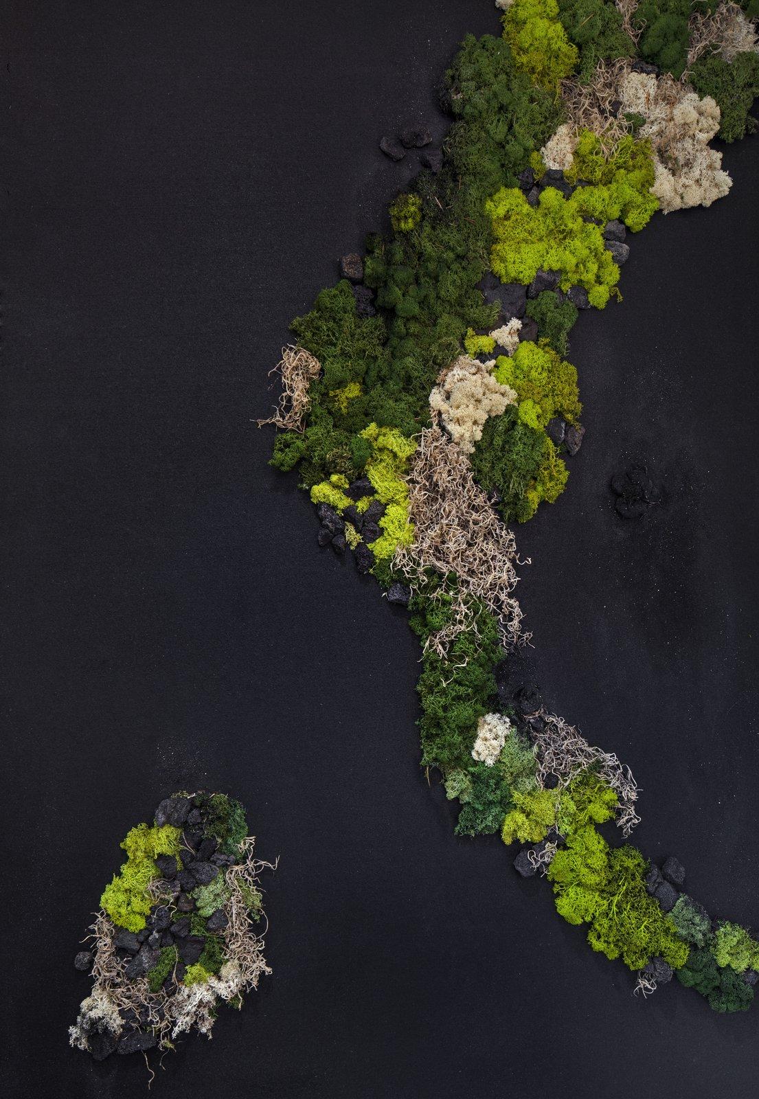 Living Moss wall in powder room created by Minarc.  Dawnsknoll by Minarc