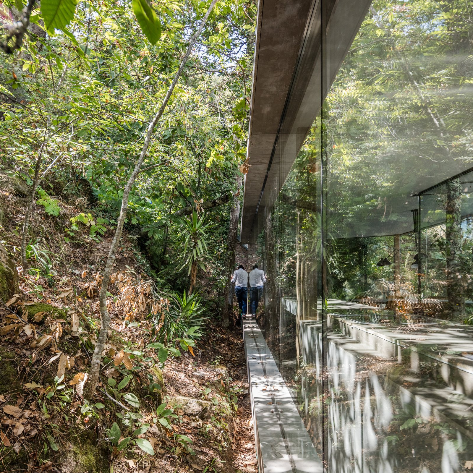 Windows Light enters the home from all sides, even those which are closest to the hill.  Photo 10 of 15 in A Portuguese Glass House Uses Surrounding Foliage as a Privacy Screen