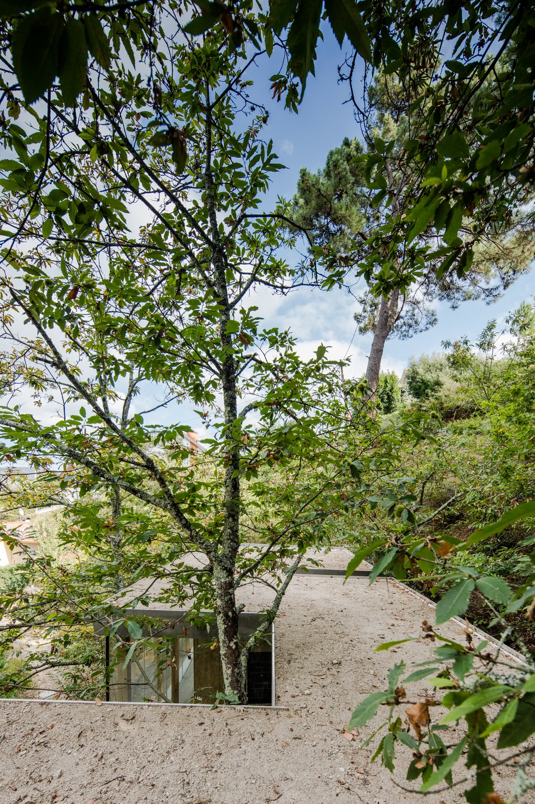 Outdoor, Rooftop, and Trees The home is designed to maneuver around existing trees.  Photo 13 of 15 in A Portuguese Glass House Uses Surrounding Foliage as a Privacy Screen