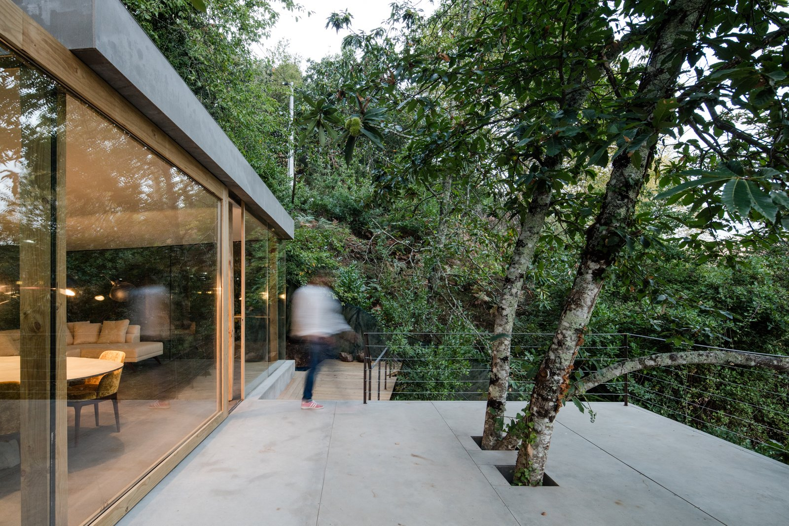Outdoor, Trees, Slope, Rooftop, Concrete, Wood, and Large Existing trees poke through the large patio.  Best Outdoor Rooftop Slope Photos from A Portuguese Glass House Uses Surrounding Foliage as a Privacy Screen