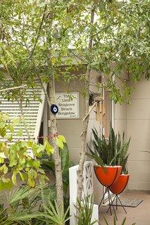 Front Patio Vegetation