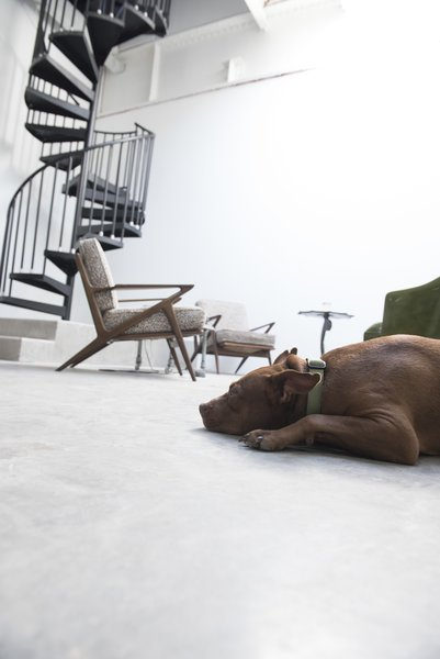 Spiral to residence and rooftop terrace, with Max.  Studio GoodLight by Liesa Cole