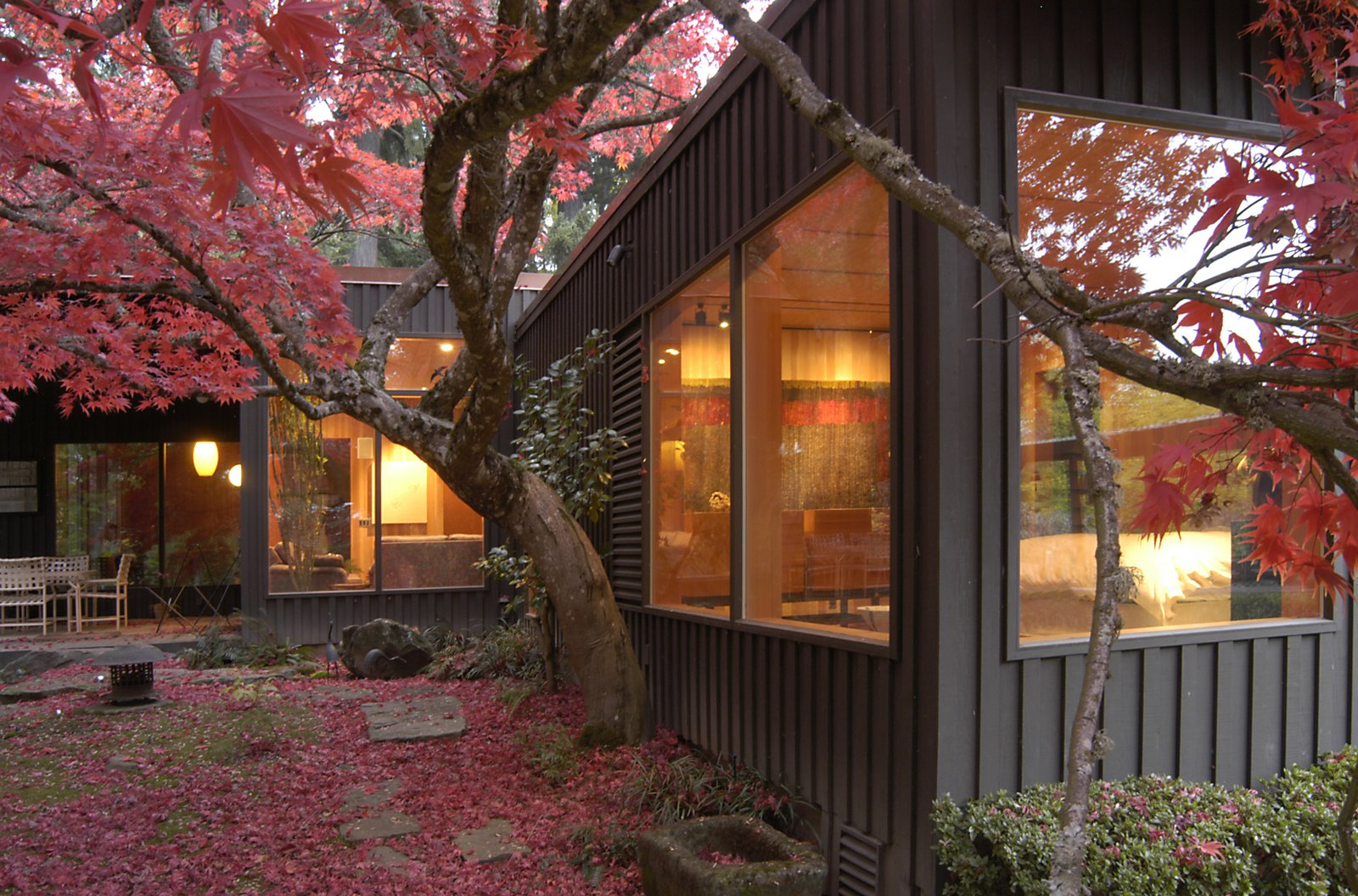 A majestic Japanese maple nestles against the Master Bedroom and adds vibrant color to the courtyard.  Belluschi Addition by Richard Brown Architect