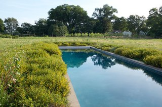Tall indigenous wetland grasses grow fecund, right up to the border of the saltwater swimming pool.