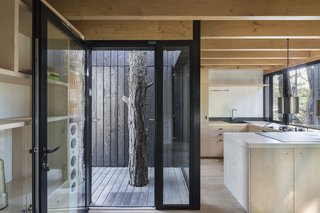 A deck at the entry wraps an existing tree. The charred wood exterior contrasts sharply with the blonde wood interior.