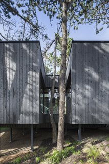 An exterior view shows how the building wraps around the site's existing trees.