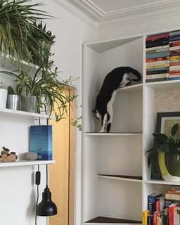 Marvin demonstrates the cat ladder. The pendant is the Roly Roscoe light in textured black by Offdn.