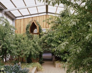 """A glimpse of the raised garden beds and a thriving avocado tree. The firm used Australian cypress pine for barn doors, walls, surfaces, planters, seating, and decking, for its resistance to rot. """"It can be plunged into the ground and, if used in large enough sections, yields a kind of chunky appeal,"""" says Hill."""