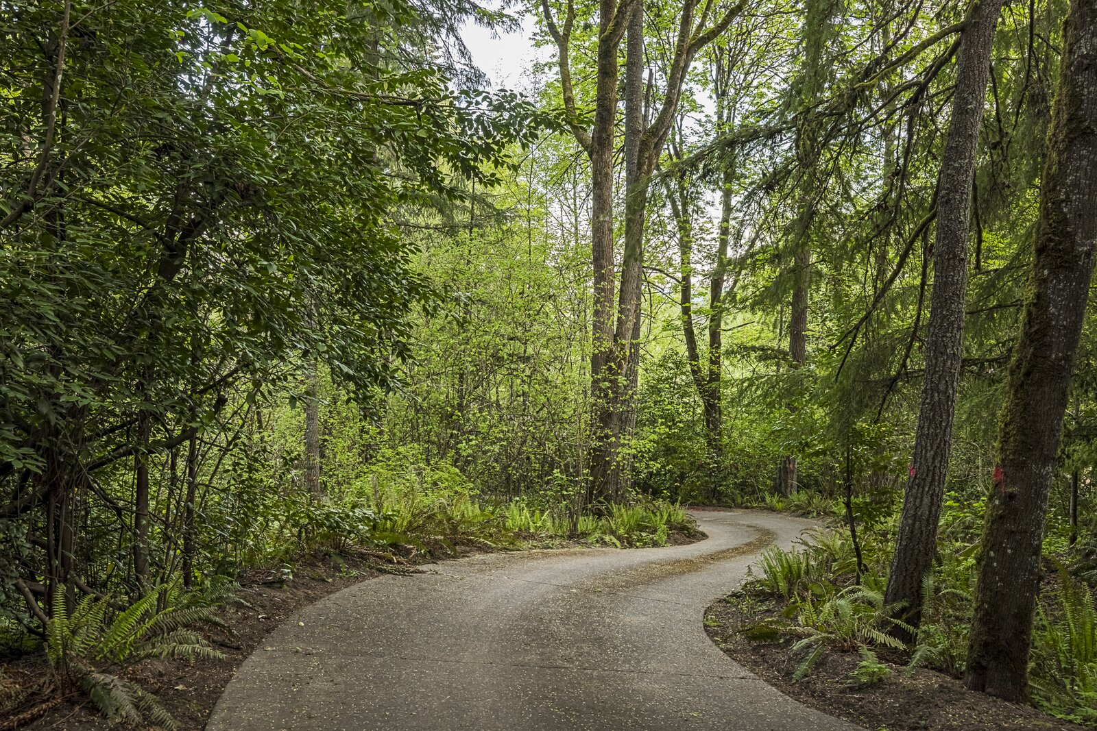 Driveway of the Mason Residence by Saul Zaik
