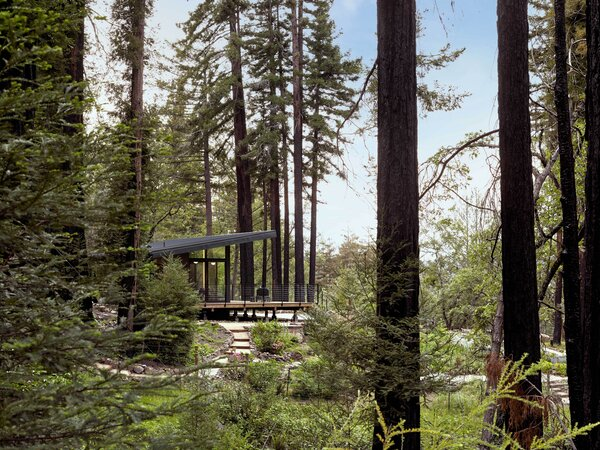 """The preserved grove of Redwoods is just past the house. """"They loved the house that was there so much that, it was important to create something that wasn't trying to replace it, but would function for them in a different way,"""" says Boyer. Thus, this cabin reconnects the couple to the land, and gives them """"that place of refuge"""" they need in nature."""