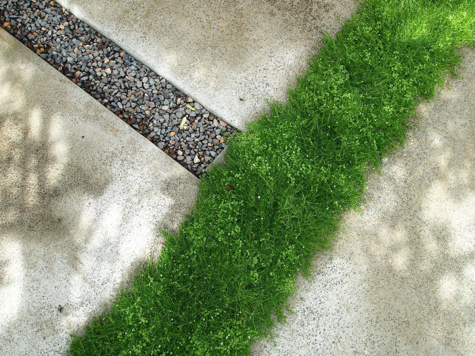 Outdoor, Back Yard, Garden, Hardscapes, Grass, Walkways, Concrete Patio, Porch, Deck, Small Patio, Porch, Deck, and Pavers Patio, Porch, Deck Moss + Mint: A yard of cast-in-place concrete pavers can be rather stark. But Scotch moss is soft underfoot, and mixes with fragrant, steppable Corsican mint. For more info: https://www.howellsarc.com/projects/michael-b/  Michael B by Howells Architecture + Design