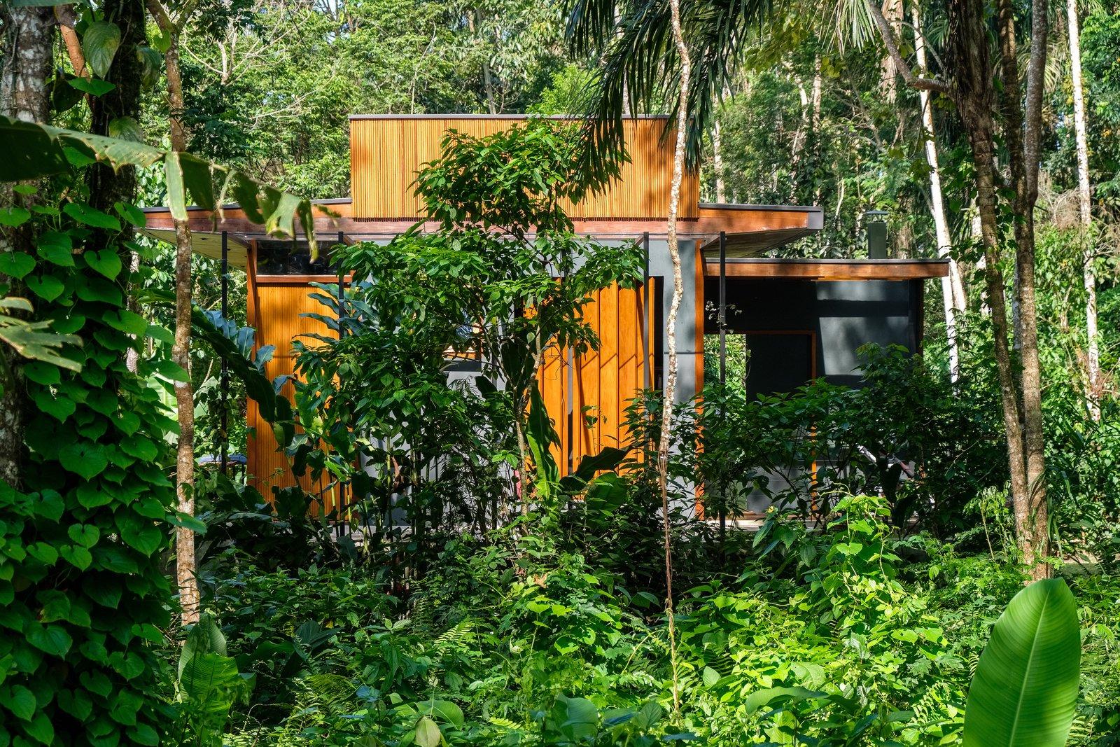 Exterior, material de revestimiento de hormigón, material de revestimiento de madera, tipo de construcción de vivienda y línea de techo plana La casa revestida de madera se encuentra en el exuberante follaje del paisaje existente.